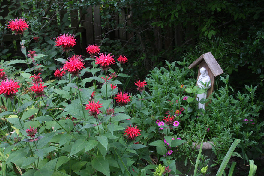 St Francis annuals and monarda