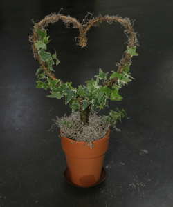 a picture of a heart-shaped ivy topiary