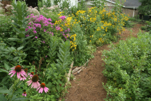 a picture of a native plant garden
