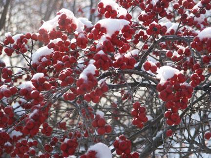 Native Plants With Winter Interest The Gateway Gardener