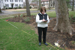 a picture of a landscape designer measuring and plotting an existing landscape