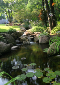 A photo of a water garden