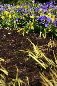 an image of mulch and pansies