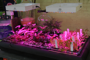 an image of plants growing under LED grow lights