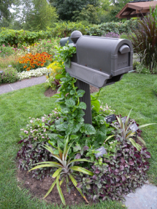 photograph of an edible planting around a mailbox