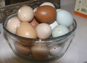 a picture of multi-colored eggs