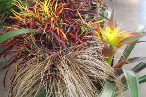 An indoor fall harvest botanical display