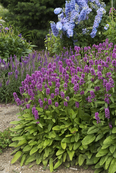Outstanding Perennials for Landscaping Success | The ...