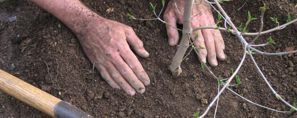 An image of planting a tree