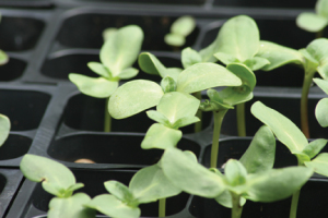 a picture of seedlings