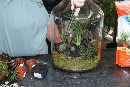 An image showing how to make a terrarium