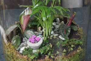 A picture of a finished terrarium