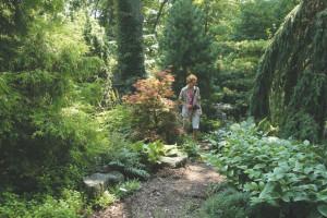A photo of a shade garden