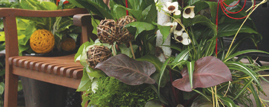 An image of live plants for interior decorating