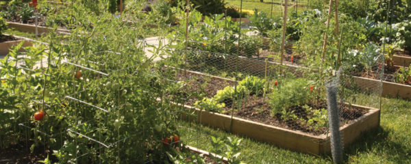 A photo of raised vegetable garden beds