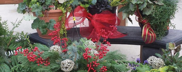 A picture of live winter holiday plants