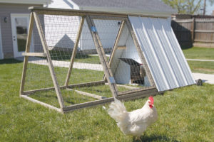 A photo of a portable chicken coop with chicken
